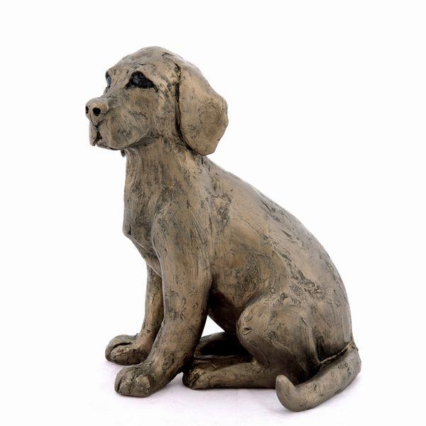 Toto - Labrador puppy