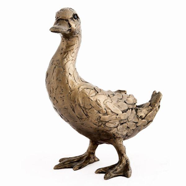 Darcy Duck