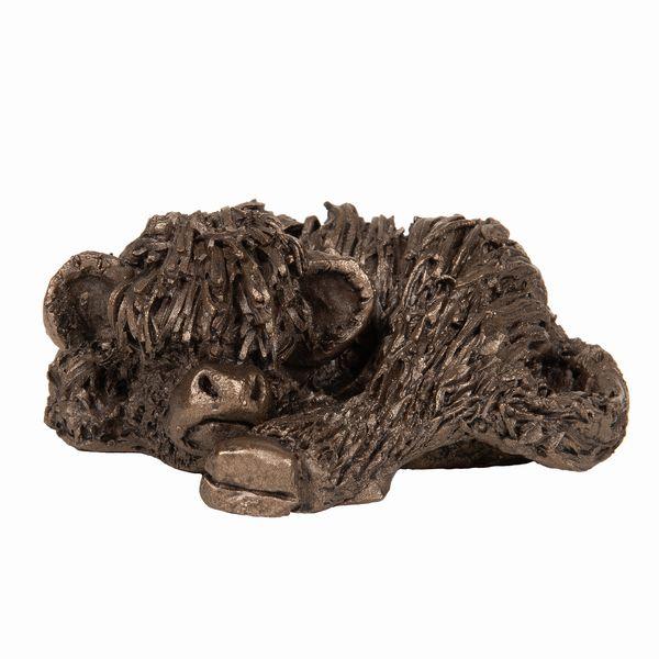 Highland Calf curled up