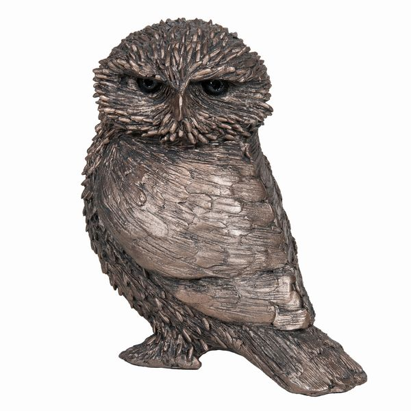Olly - Little Owl