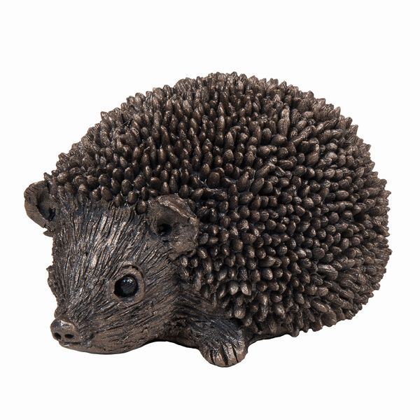 Squeak - Junior Hedgehog