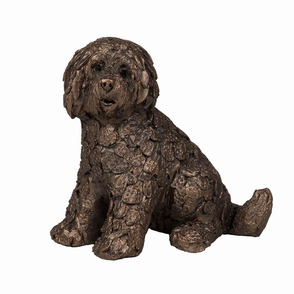 Frith - Shorty Labradoodle sitting