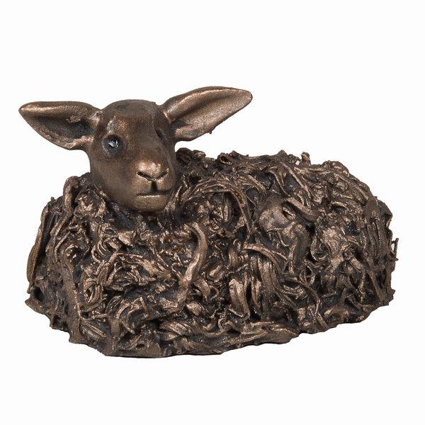 Swaledale Ewe sitting